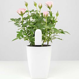 Xiaomi Flower Care™ 4 in 1 Plant Smart Monitor (White)