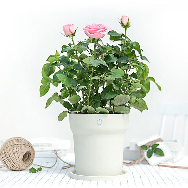 Xiaomi Huahuacaocao Smart Flower Pot