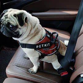 Petkit Car Safety Belt for Dog