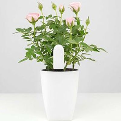 Xiaomi Flower Care™ 4 in 1 Plant Smart Monitor (White)