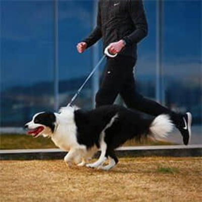 PETKIT GO-Smart Pet Leash with Handle
